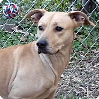 Adopt A Pet :: NEKA - Terre Haute, IN