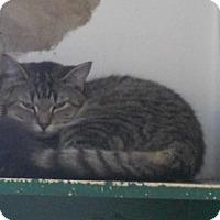 Adopt A Pet :: Reegan - Belleville, MI