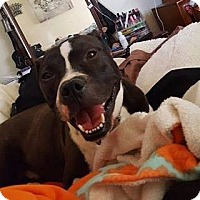 Adopt A Pet :: Mack - Roanoke, VA