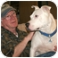 Photo 2 - Dogo Argentino/American Staffordshire Terrier Mix Dog for adoption in Nashville, Tennessee - Jules