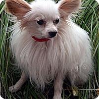Adopt A Pet :: Denver=Adoption pending - Bridgeton, MO
