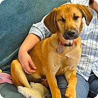 Adopt A Pet :: Lil Jake - Homewood, AL
