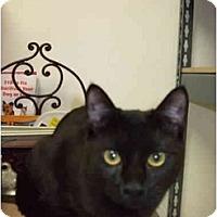 Adopt A Pet :: Voodoo - Fort Lauderdale, FL