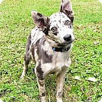 Adopt A Pet :: Kelsie - Mocksville, NC