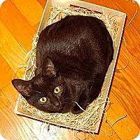 Adopt A Pet :: Oliver - Montreal, QC