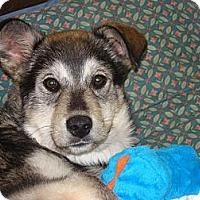Adopt A Pet :: Buster - Saskatoon, SK