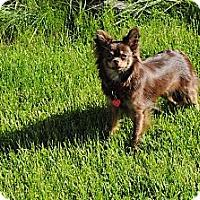 Adopt A Pet :: Chloe Adopted - Nine Mile Falls, WA