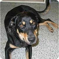 Adopt A Pet :: Tory - BC Wide, BC