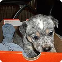 Adopt A Pet :: Willow - Adoption Pending - Phoenix, AZ