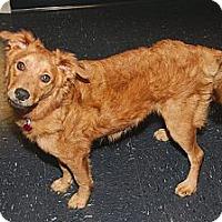 Adopt A Pet :: Knik - Houston, TX