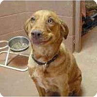 Adopt A Pet :: Sparkle - Phoenix, AZ