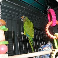 Adopt A Pet :: Hi-C - Neenah, WI