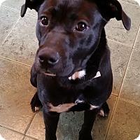 Adopt A Pet :: GRAYSON - Paron, AR