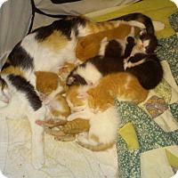 Adopt A Pet :: Celine - Fairborn, OH