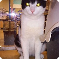 Adopt A Pet :: Cry Baby - Buena Park, CA
