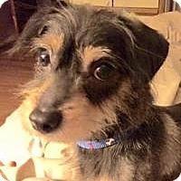 Adopt A Pet :: Stuey - Marlton, NJ