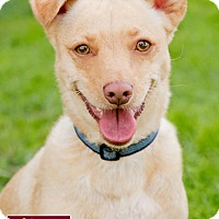 Adopt A Pet :: Zeus Little - Marina del Rey, CA