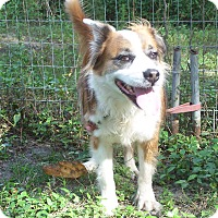 Adopt A Pet :: TOBY - Odessa, FL