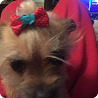 Adopt A Pet :: Ellie Beth - Weatherford, TX