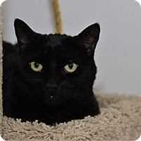 Adopt A Pet :: Kitty - Sacramento, CA