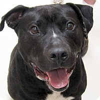 Adopt A Pet :: Shadow - Adoption Fee Paid! - Jefferson, WI