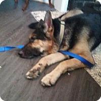 Adopt A Pet :: Gunner - Citrus Springs, FL
