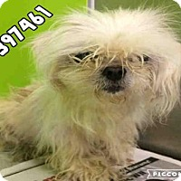 Adopt A Pet :: A397461 - San Antonio, TX
