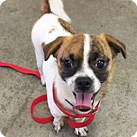 Adopt A Pet :: Myla - Fairfield, OH
