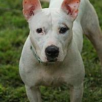 Adopt A Pet :: Solana - Lafayette, IN