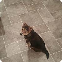 Adopt A Pet :: Link - St. Louis Park, MN