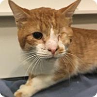 Adopt A Pet :: Seth - Elyria, OH