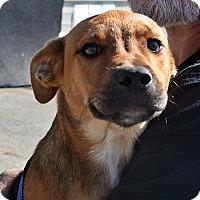 Adopt A Pet :: Mitzi - Beebe, AR