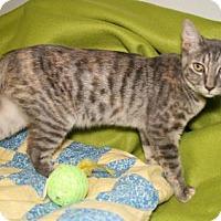 Adopt A Pet :: Henna - Bradenton, FL