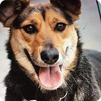Adopt A Pet :: SHAE VON SCHWERTE - Los Angeles, CA