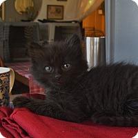 Adopt A Pet :: Dee - Fremont, CA