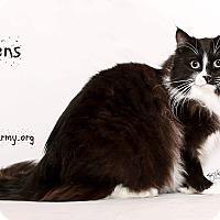 Adopt A Pet :: Mittens - Riverside, CA