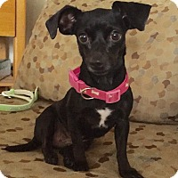 Adopt A Pet :: Winifred (BH) - Santa Ana, CA