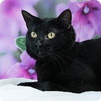 Adopt A Pet :: Daria - Houston, TX