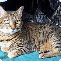 Adopt A Pet :: Kit - Lantana, FL