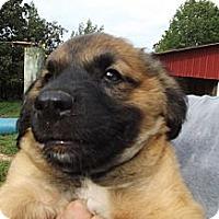 Adopt A Pet :: PeeWee - Jackson, TN
