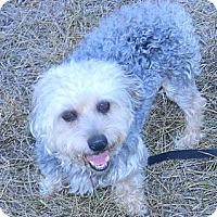 Adopt A Pet :: ROSCO - cameron, MO
