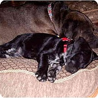 Adopt A Pet :: Smokee - Scottsdale, AZ