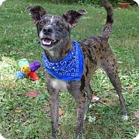 Adopt A Pet :: Catalina - Mocksville, NC