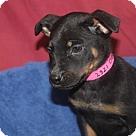 Adopt A Pet :: Cree