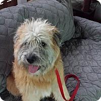 Adopt A Pet :: Oliver adoption pending - Ascutney, VT