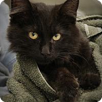 Adopt A Pet :: Kitt - Hudson, WI