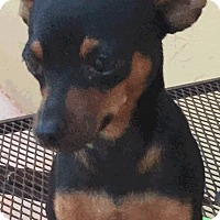 Adopt A Pet :: Panchito - Coral Springs, FL