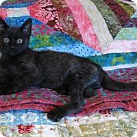 Adopt A Pet :: Knox - Geneseo, IL