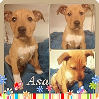 Adopt A Pet :: Asa-pending adoption - East Hartford, CT