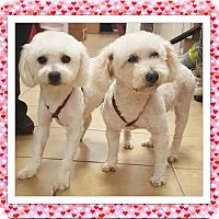 Adopt A Pet :: Cubby and Sadie - TX - Tulsa, OK